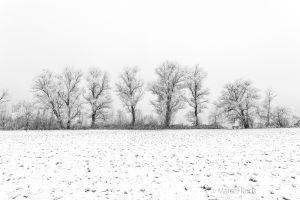 Zug-Baum.jpg