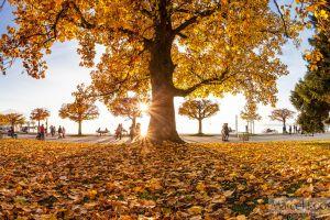 zug-Herbst.jpg